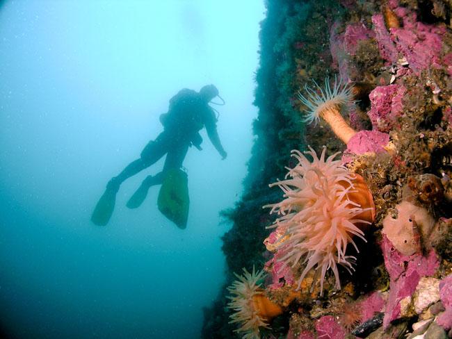 Kongsfjorden-diving.jpg