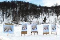 Polar bear posters web
