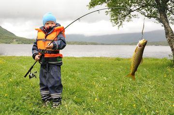 Ungfisker