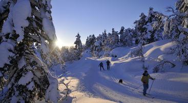 Enetyrstemning i skiløypene i saurdal, foto Erik Hoel