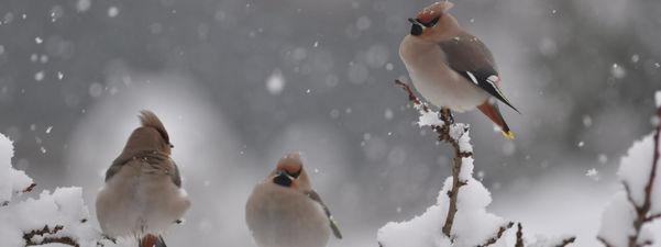 Fuglar. Foto: Torbjørn Hasund