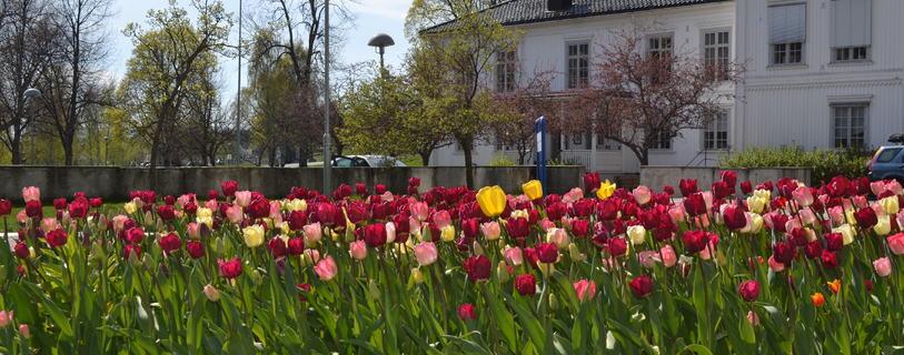 Blomster og rådhus