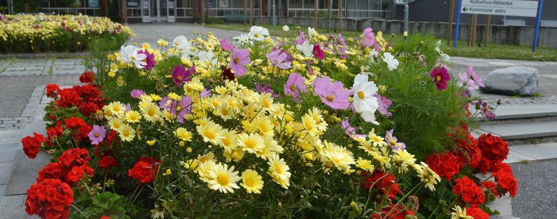 blomst rådhuset