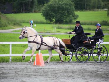 Harald Løtuft og Finslands Norgrima : stemneleiar Fjordhest- NM, Leiar i Sunnfjord Fjordhestlag,  lærar i hestefag ved Mo og Øyrane vgs.