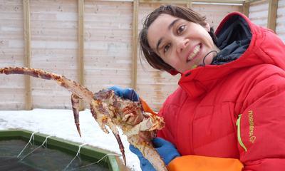Perrine crab