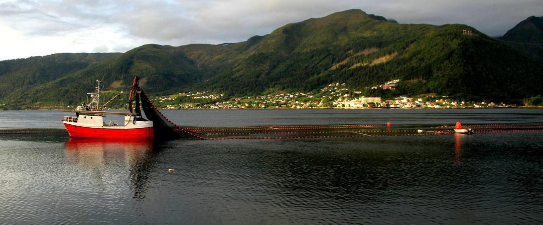 Brislingfiske i Esefjorden, foto jh
