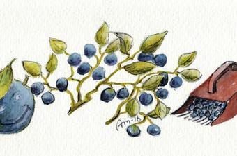Ut og plukk blåbærsbilde på krus i 2016