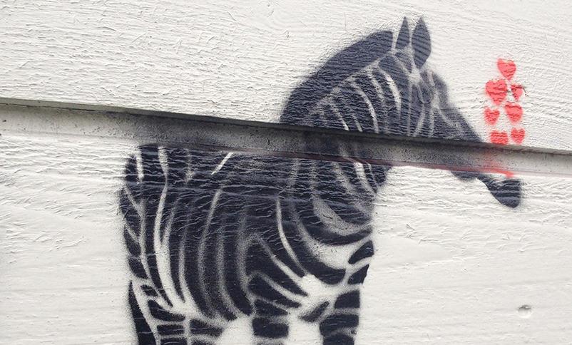 Street art, zebra