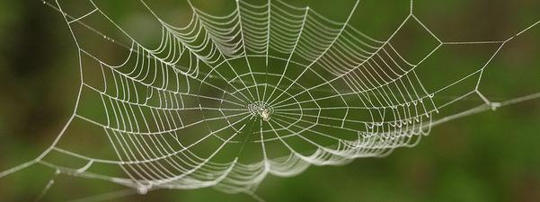Foto som syner nærbilete av eit edderkoppnett. Nettet er kvitt, bakgrunnen er grøn.