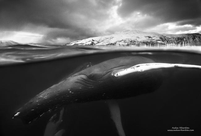 NNPC Havets giganter i mørketid AHR 2017_650x440.jpg