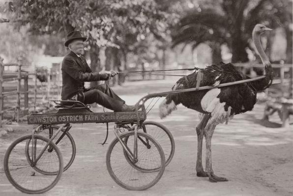 Eit uvanleg transportmiddel på våre kantar. (c) Wikipedia