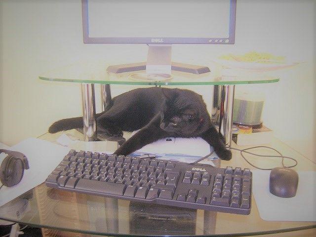 Computer Cat Foto: Flickr