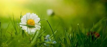 bloom  1834912  3402