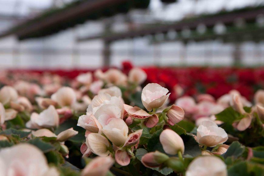 Drivstua blomster april-27