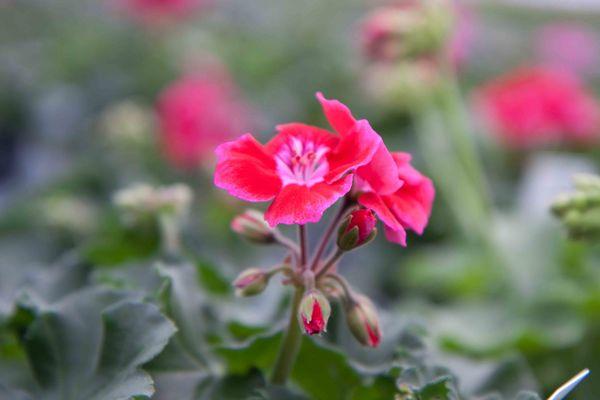 Drivstua blomster april-33