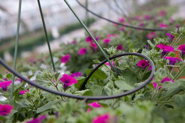Drivstua blomster april-39
