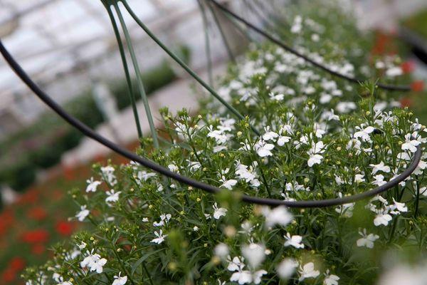 Drivstua blomster april-42