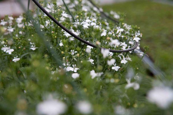 Drivstua blomster april-43