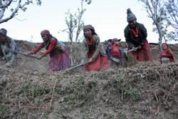 Terrassebruk: Jorden klargjøres for grønnsakdyrking