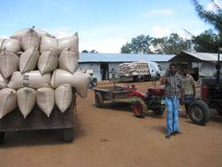 Risen fraktes til nytt lagerbygg