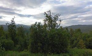 Skog Dåfjord_300x182