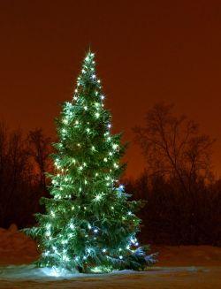 Juletre utenfor menighetshuset ved Tana bru