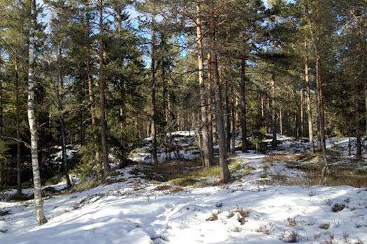 Terrengbilde til Smaaleneneløpet 2013, tatt tidligere i vinter. Arrangørfoto.