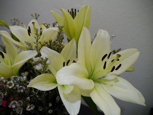 Lilje hvit