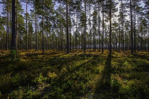 Her kan du boltre deg i skog, åser, fjell og fjord