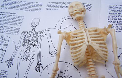 Illustrasjon fysioterapi