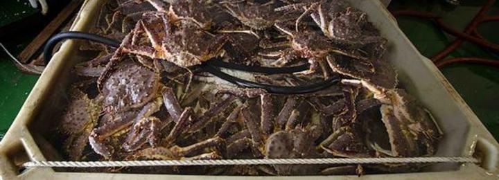 Krabber i kar, nett