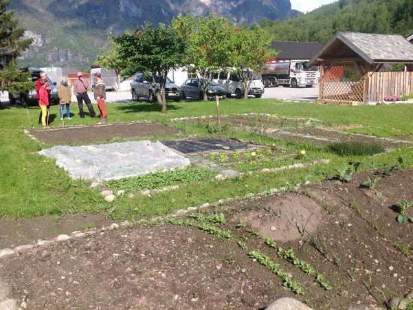 Foto frå omvisning på skulegarden på Sogn Jord og Hagebruksskule i Aurland. Det er sol og grønt gras, vi ser fleire grønsakssenger, og fem personar som står og snakkar saman litt i bakgrunnen.