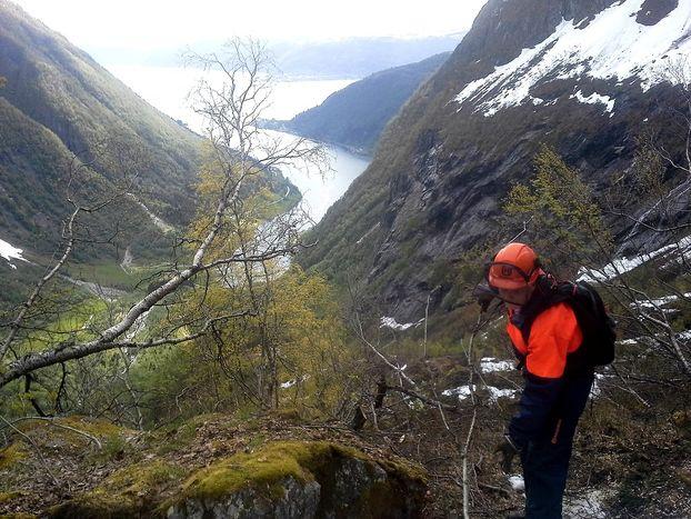 Skogrydding opp til Gulleplestølen, foto jh