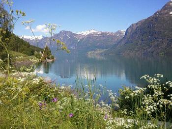 Foto som syner ein flott sommardag i Olden. Det er blå himmel, i framgrunnen ser i gras og villblomar, og i bakgrunnen - på andre sida av fjorden - ruver fjella. Foto: Sogn og Fjordane fylkeskommune