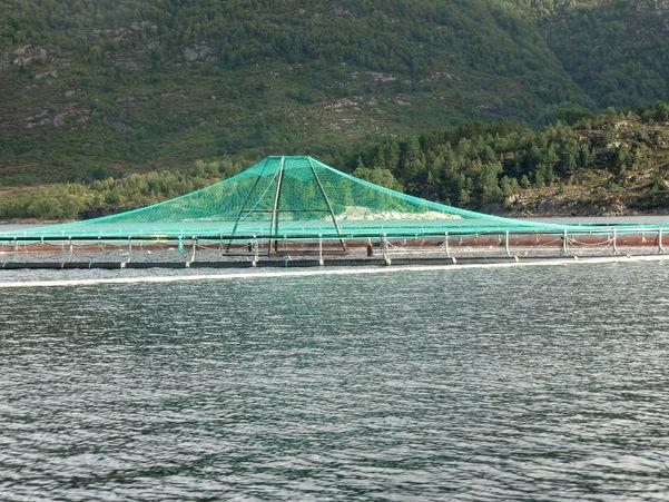 Foto som syner delar av eit fiskeoppdrettsanlegg.