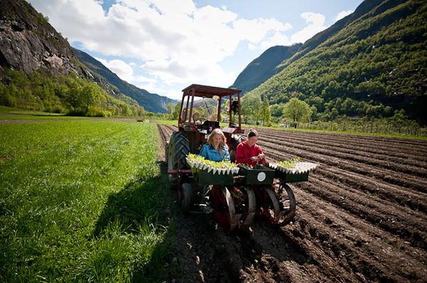 Foto av to kvinner som haustar noko bak på ein traktor på Sogn Jord- og Hagebrukssskule. Foto: Sogn Jord- og Hagebruksskule.