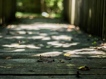 Trebru i skogen
