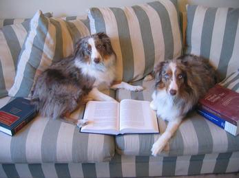 To hunder med bok på sofaen