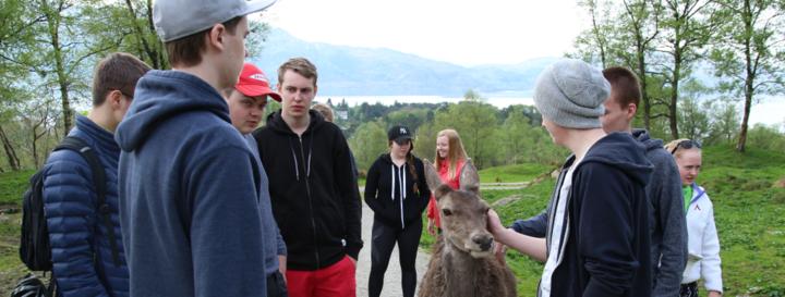 elevar frå service og samferdsle vert venn med ein hjort under innovasjonscamp på Svanøy