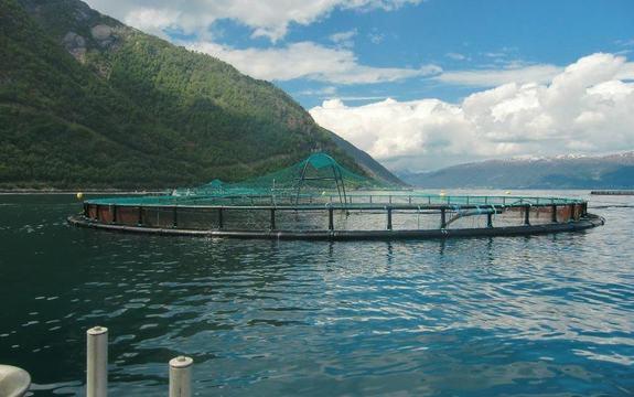 Oppdrettsanlegg på fjorden