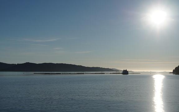 Oppdrettsanlegg på fjorden med lav sol