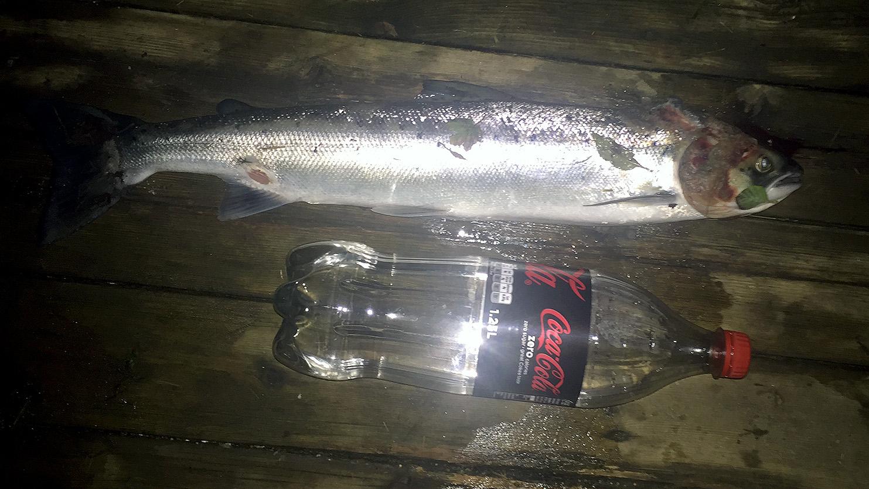 Syk fisk 3.jpg