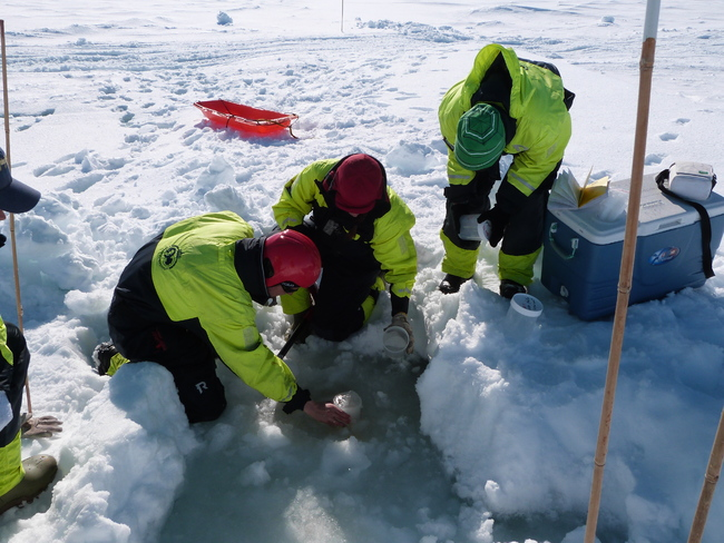 Mar-Fernandez-Mendez-Norsk-Polarinstitutt2.JPG_2117065555_650x488.jpg