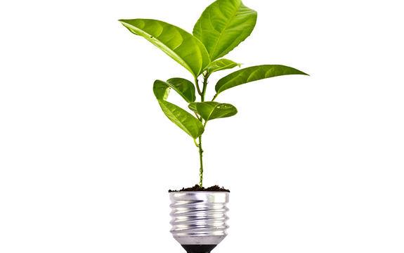 Illustrasjon som syner sokkelen på ei lyspære, der det veks grøne blader opp av. Skal illustrere enøk-tiltak.