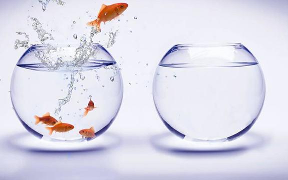 Foto av to gullfiskebollar. Den eine er tom, og i den andre er det fem fiskar, der den eine har teke sats og er på veg over i den tomme bollen.