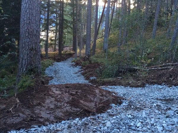 Foto frå turstien som blir laga i Trivselsskogen i Gloppen. Vi skimtar sola mellom trea. Stien er ikkje ferdig, men det er rydda skog og lagt på pukk, så vi ser kvar han går.