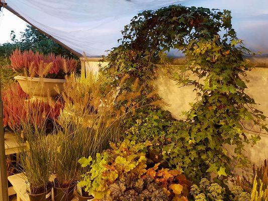 drivstua høst 11