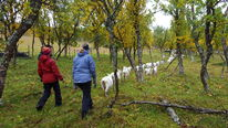 Vang Gård Hiking with the Goats