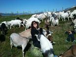Visit the goats
