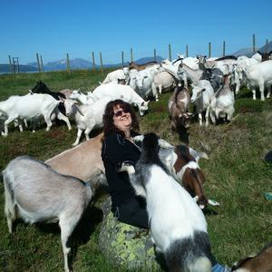 Visit the goats